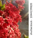 flowers background and textures ... | Shutterstock . vector #1044159820