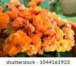 flowers background and textures ... | Shutterstock . vector #1044161923