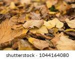 background group autumn orange...   Shutterstock . vector #1044164080