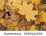 background group autumn orange...   Shutterstock . vector #1044164104