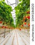 industrial growth of... | Shutterstock . vector #1044186820