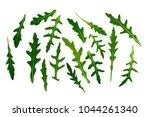 arugula isolated on white... | Shutterstock . vector #1044261340