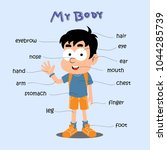 school boy cartoon  body chart... | Shutterstock .eps vector #1044285739