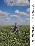 Small photo of Farmer or agronomist in watermelon field gesturing with thumb up
