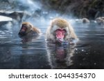 snow monkey or japanese macaque ... | Shutterstock . vector #1044354370