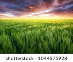 grass on the field during... | Shutterstock . vector #1044375928