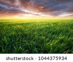 grass on the field during... | Shutterstock . vector #1044375934