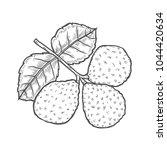 bergamot engraved style kaffir... | Shutterstock .eps vector #1044420634