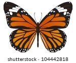 The Monarch Butterfly  Danaus...