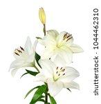 white lily flower | Shutterstock . vector #1044462310