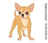 Chihuahua Vector Isolated