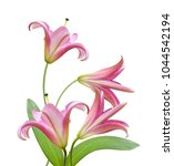 pink lily flower isolated on a... | Shutterstock . vector #1044542194