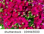 Fresh Colorful Flower Background