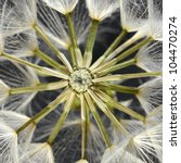 dandelion seed head | Shutterstock . vector #104470274