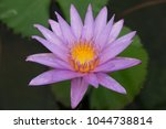 lotus flower blooming | Shutterstock . vector #1044738814