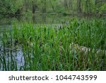 forest lake bay  with cane and... | Shutterstock . vector #1044743599