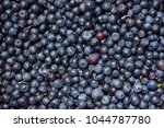 Blue Fruity Background Of Smal...