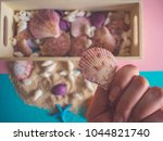 close up of seashells and... | Shutterstock . vector #1044821740
