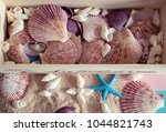close up of seashells and... | Shutterstock . vector #1044821743