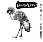 Hand Drawn Sketch Of Crowned...