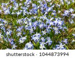 ordinary star hyacinth ... | Shutterstock . vector #1044873994