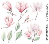 Watercolor Magnolia  Flowers...