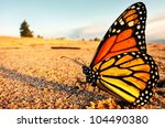 A Monarch Butterfly Takes A...