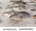 many fishes in iced for sale at ... | Shutterstock . vector #1044904090