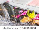 vibrant pink red rose flowers ... | Shutterstock . vector #1044937888