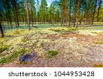 spring pine trees forest ground ... | Shutterstock . vector #1044953428