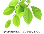 beech leaves isolated on white... | Shutterstock . vector #1044995773