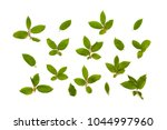 twigs with green leaves...   Shutterstock . vector #1044997960