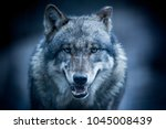 scary dark gray wolf  canis... | Shutterstock . vector #1045008439
