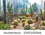 Various Cactus In A Glass...