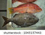 close up of the fresh fish on... | Shutterstock . vector #1045157443