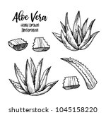 hand drawn vector illustration. ... | Shutterstock .eps vector #1045158220