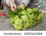 the hands of florist against... | Shutterstock . vector #1045162468