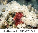 Small photo of Anthozoa under water