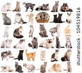 Stock photo group of cats breeds in front of a white background 104519816