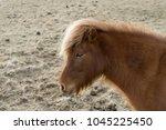 icelandic horse head  | Shutterstock . vector #1045225450