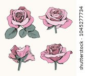 set collection of pink roses... | Shutterstock .eps vector #1045277734