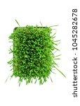 Cat Grass  Cyperus Zumula ...