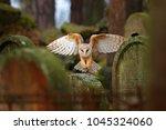urban wildlife. magic bird barn ... | Shutterstock . vector #1045324060