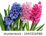 Lila Pink And Purple Flowers O...