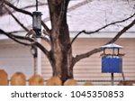 Backyard Scene. Birds Eating...