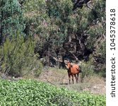 Small photo of Brumby standing in the bush