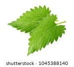 lemon balm melissa leaf... | Shutterstock . vector #1045388140