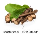 burdock roots isolated on white ... | Shutterstock . vector #1045388434