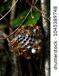 Paper Wasps Nest In Rarotonga ...