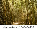 a dense bamboo grove | Shutterstock . vector #1045406410
